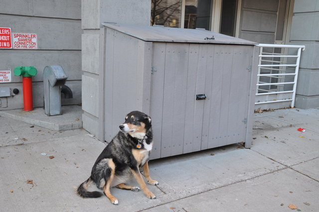 <p>A development on Conselyea Street has trash receptacles that are technically illegal since the developer never provided space for trash, residents claim.</p>