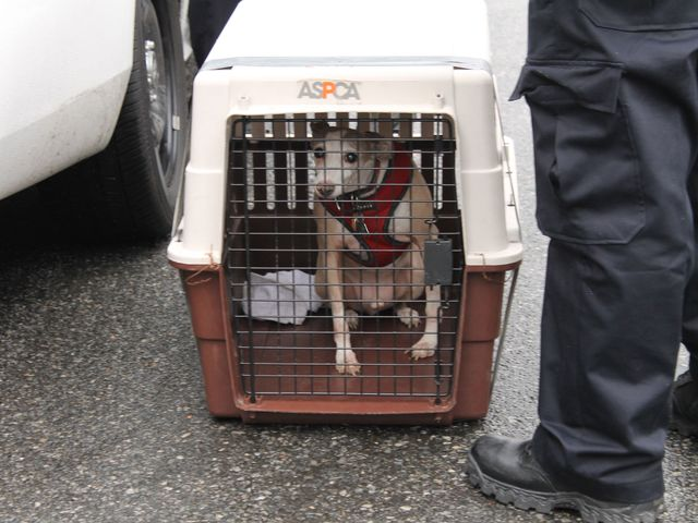 <p>Police removed this dog from 87 Hamilton Place Jan. 28, 2013, after a man was found dead in an apartment there.</p>