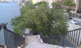 UES Locals Lament Loss of East River Tree Destroyed by Sandy