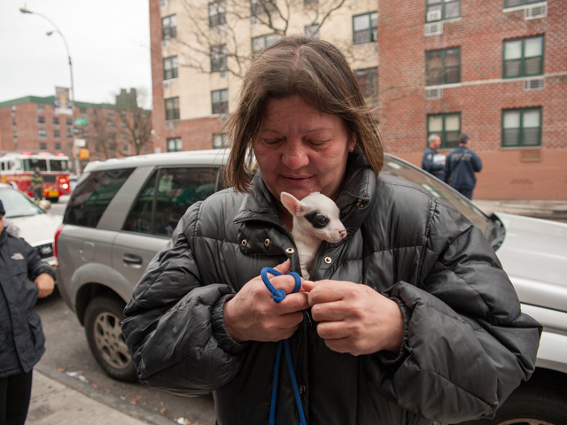 <p>Rose Martinez places her shivering one month old female Chihuahua inside her jacket to keep her warm on Jan. 1, 2013.</p>