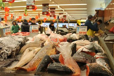 "Raw fish and seafood purchased from Chinatowns in Brooklyn, Manhattan, and Queens have been the source of a rare skin infection called ""M. marinus,"" that leads to red swollen bumps, Health Department officials said."