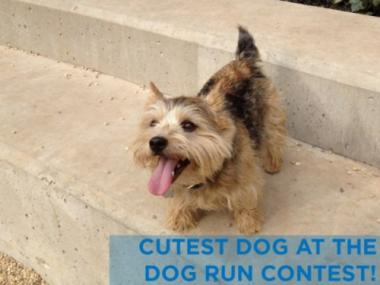 The Brooklyn Bridge Park is hosting a dog photo contest of pictures taken of pups in the park's two well-trodded dog runs.