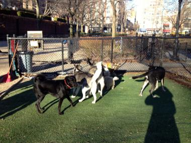 Despite the hefty price tag, dog run organizers want to be the first in the city to use fake grass.