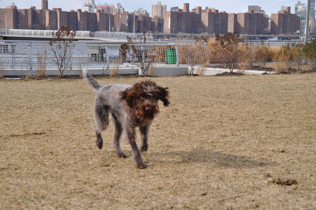 <p>Paul Duey&#39;s dog played off its leash one recent afternoon in Transmitter Park. Duey said his pet wasn&#39;t disturbing anyone, especially since the park was empty.</p>