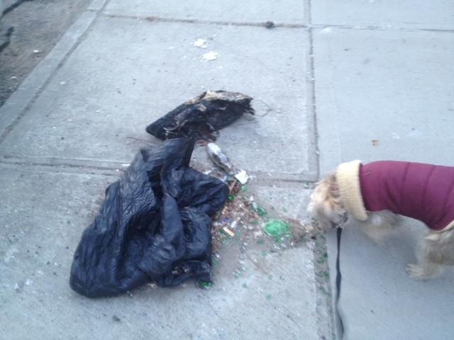 <p>Danielle McGunagle&#39;s&nbsp;dog Lola nosed through trash at West Street and Greenpoint Avenue.</p>