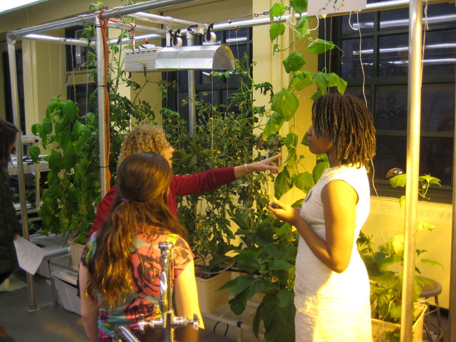 <p>A student shows visitors the hydroponic&nbsp;vegetables in her classroom at the Computer School.</p>