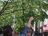 Tree Care Class Helps Queens Residents Branch Out into World of Pruning