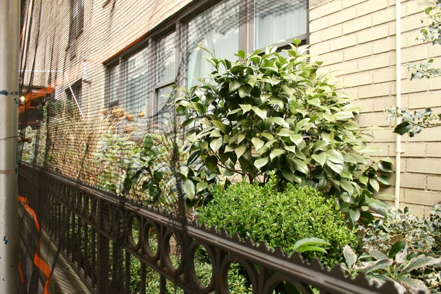 <p>&quot;Sometimes I see whole bushes stomped on, flowers yanked out and plenty of trash,&quot; said Peter Gjoni, superintendent of 145 E. 15th St. &quot;Sometimes there&#39;s vomit on the sidewalk and in the garden.&quot;</p>