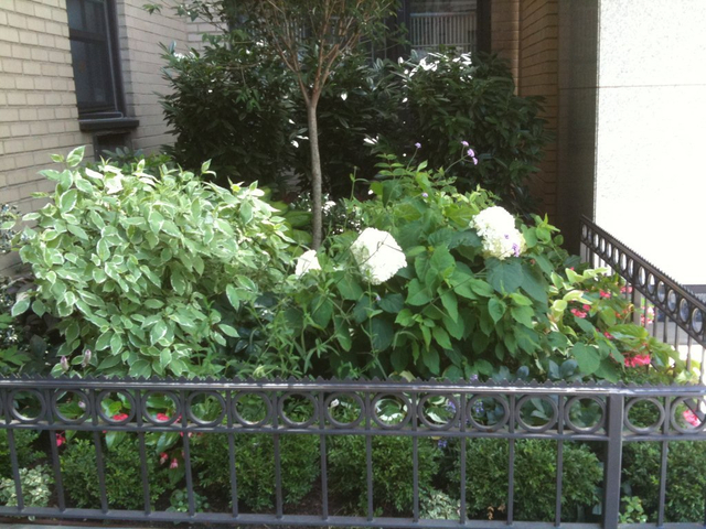 <p>A photo of the Garden at 145 E. 15th St. taken during the summer of 2012.</p>