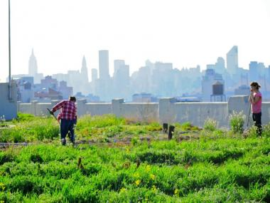 The compost will be used to enrich the soil at Brooklyn Grange's roof farm on Northern Blvd. in Queens.