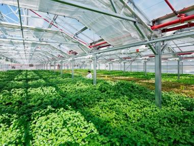Gotham Greens is planning to build a huge commercial greenhouse in Southeast Queens.