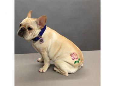 Groomer-to-the-stars Jorge Bendersky is putting glittery temporary tattoos on neighborhood pooches.