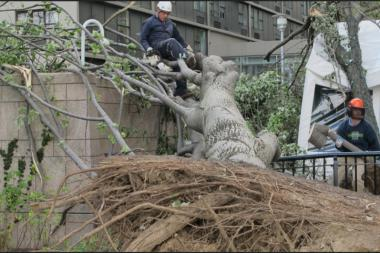 A severe storm took down trees in Battery Park City on Saturday.