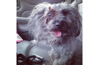 Anarchy Animal Rescue found a malnourished, matted 1-year-old poodle mix they named Charlie this week.