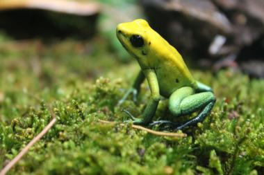 A new exhibit showcases the wonder and weirdness of frogs.