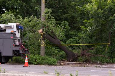 A truck crashed into a tree on Hylan Boulevard, taking out power lines, and knocked out power for residents in Bay Terrace and Oakwood on Wednesday morning.