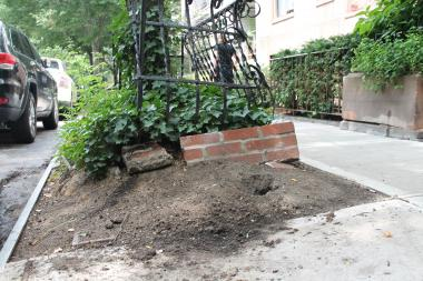 A new program will work to fight rats burrowing in local tree pits.