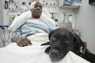 Cecil Williams, 60, and his guide dog, Orlando, recover in the hospital after falling onto the railbed at the 125th Street A train subway station.