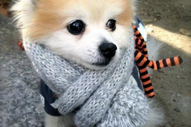 The Fort Greene-based accessories brand Monkie and Co. makes luxury knits for dogs.
