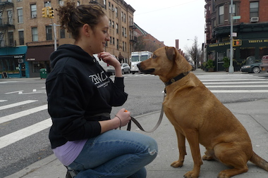"Alexis Toriello's Zen Dog training service gets dogs to behave using ""compassion and tolerance."""