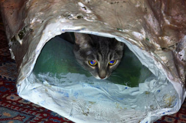 Architecture firms created inventive cat shelters for feral cats suffering through a cold winter.