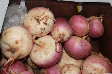 Turnips were sold at the South Bronx Mobile Market at $2 per pound.