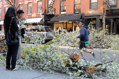 A tree fell on Bleecker Street Thursday, luckily without hitting any people or cars.