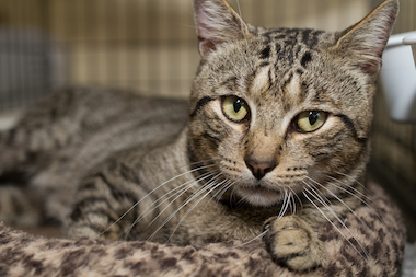 City Critters will have to find a new home for its cats when the Petco closes on May 17.