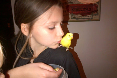 Lemi, a yellow parakeet, went missing on May 9 after she flew away from her Brooklyn Heights family. She was brought back home on May 20.