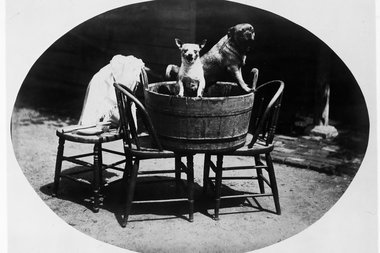 The Alice Austen House Museum will host its annual Pug Fun Day fundraiser on June 8, 2014. Austen herself had a pug, Punch, for over 15 years and featured him in many of her photographs.
