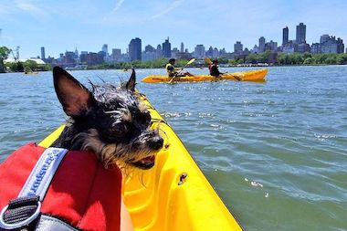 The Long Island City Community Boathouse now offers life vests for dogs, giving pet owners the chance to take their pups out on the water for a paddle around Hallets Cove.