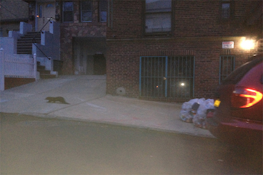 46th Precinct officer Derek Lenart snapped a picture of the rodent in the Bronx.