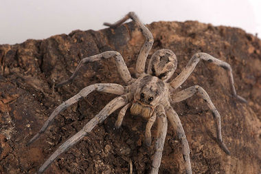 The exhibit at the American Museum of Natural History showcases 20 different spider species.
