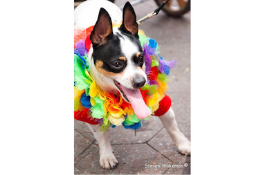 "The 10th annual Staten Island PrideFest, run by the Staten Island LGBT Community Center, will introduce a new ""Doggy Drag Show"" letting the best dressed pooches compete for awards like ""Loveliest Lady (or Best B--tch, if you're bawdy)"" and ""Tramps & Studs."""