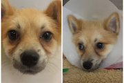 Puppy Injured After Being Struck by Parks Department Truck Is Going Home