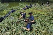 Prospect Park Needs Your Help Battling 18-Foot Weeds
