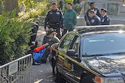 Dead Bear Cub Found in Central Park, Authorities Say