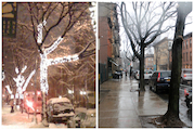 Workers Rip Down Holiday Lights While Pruning Bergen Street Trees