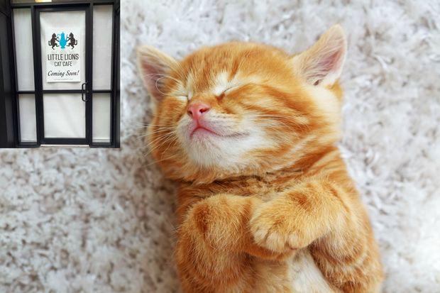 Little Lions Cat Cafe Closed