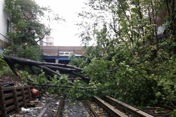 Franklin Ave Shuttle Suspended After Tree Falls On Track Prospect Heights New York