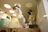 ASPCA Offers Free Cats on Black Friday and Chance at Magazine Photoshoot