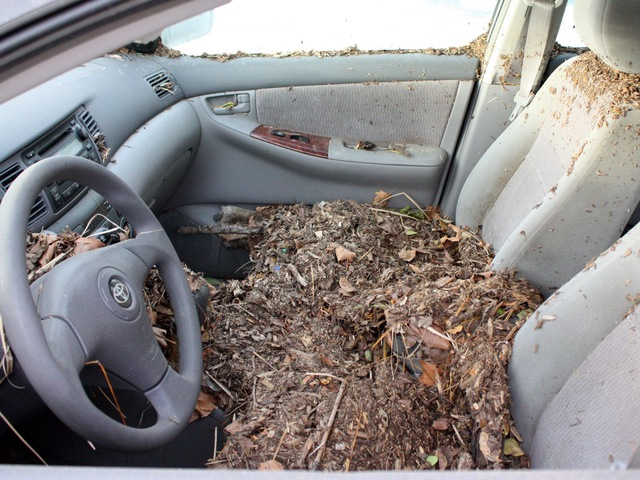 <p>A car in Coney Island filled with debris in the wake of Hurricane Sandy.</p>