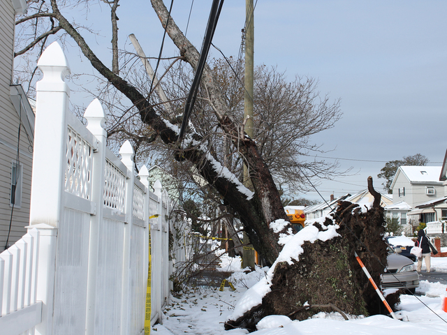 <p>A tree fell from the street and onto some power lines in Jamaica during Hurricane Sandy. Although the power has since been restored to the block, the tree was left hanging on the power lines.</p>