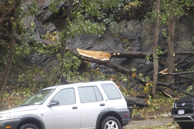 <p>Fallen tree along Dyckman St. on Oct. 30, 2012.</p>