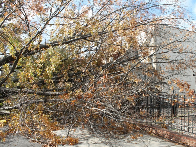 <p>The tree is blocking the house&#39;s front gate and the street.</p>