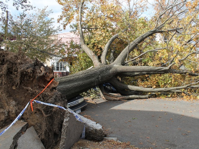 <p>The tree smashed two cars and caused the power outage in the area.</p>