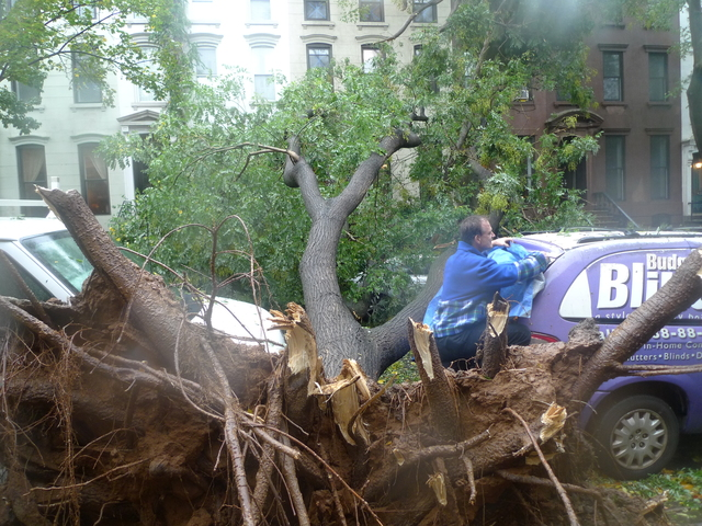 Fallen Tree on Garfield and Seventh Avenue Park Slope