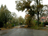 Hurricane Sandy Downs Trees, Power in Forest Hills