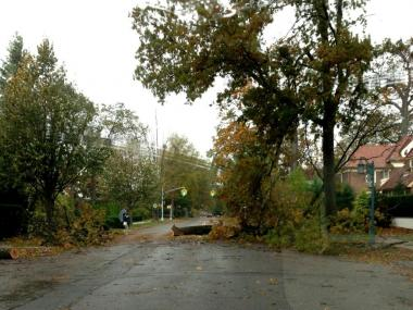 A felled tree on 71st Street in Forest Hills Gardens on Oct. 31 2012.