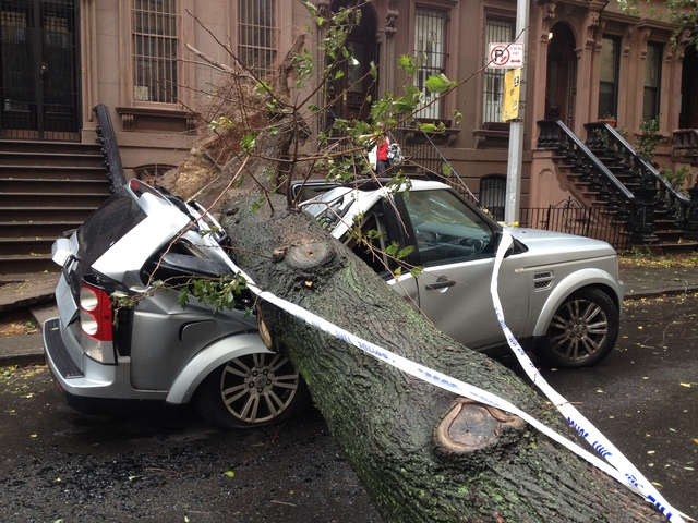 <p>A tree fell on South Elliot Place, smashing a car Oct. 30, 2012.</p>